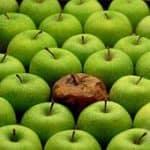 Rotte appel uit de mand